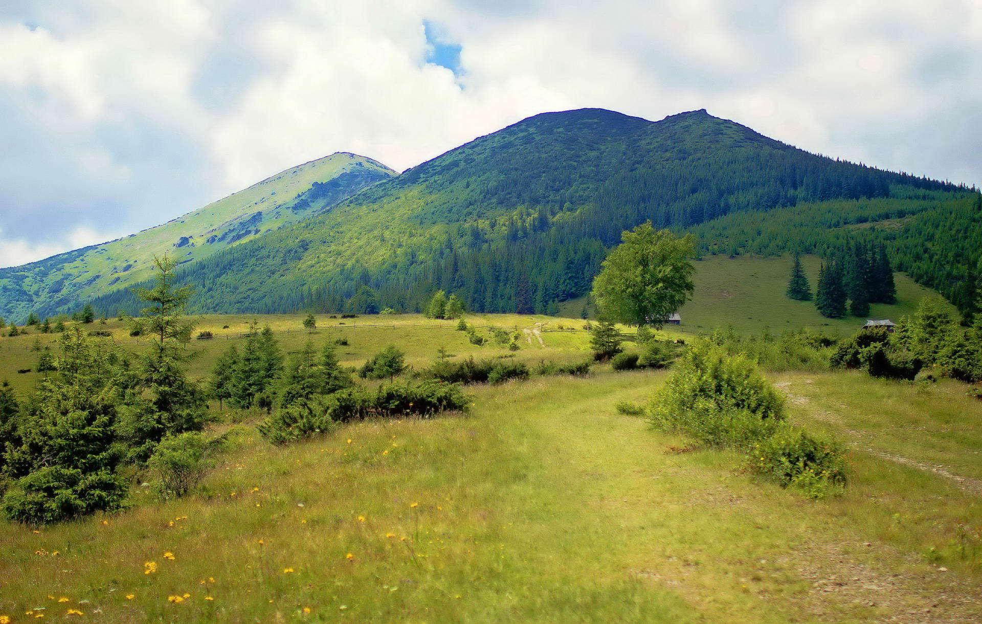 Вид на гору Смотрич, полонина