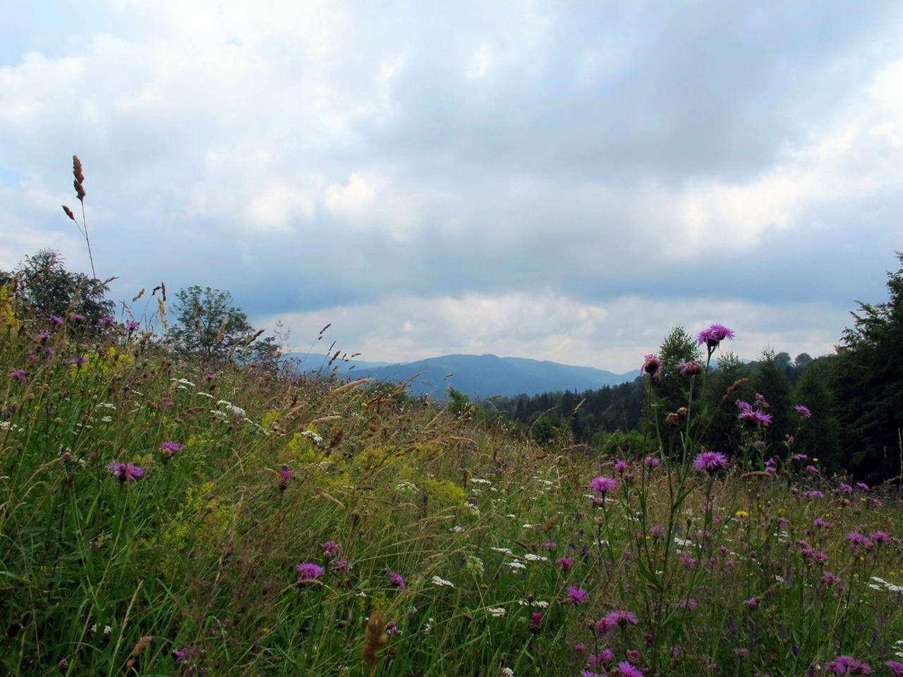 Село в Карпатах — Космач