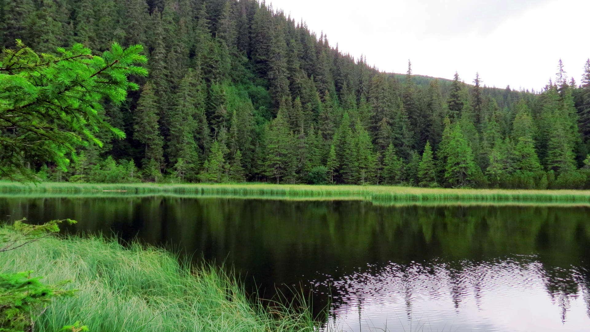 Озеро марічейка на маршруті до вершини Піп Іван Чорногірський