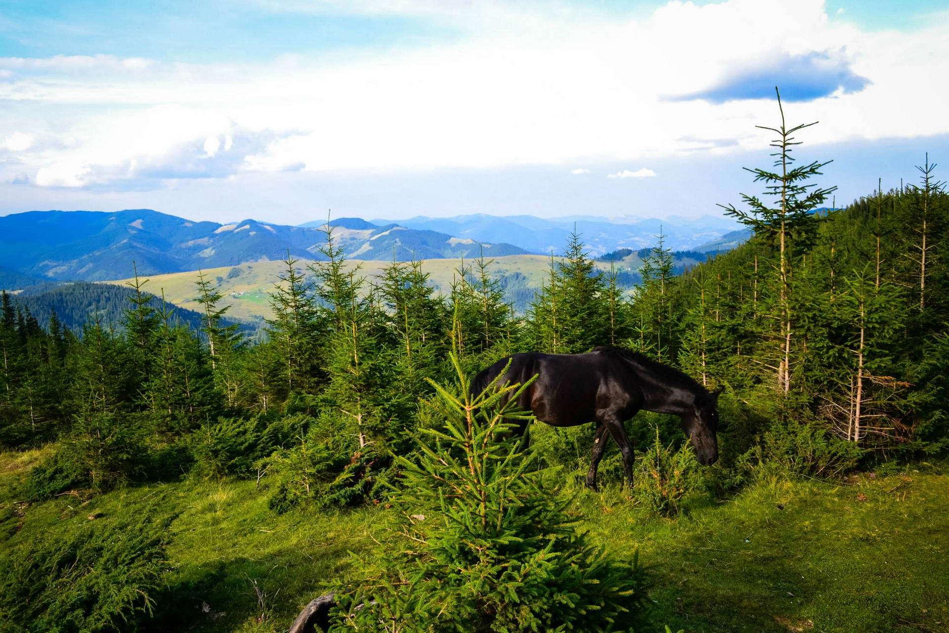 Дорогою на гору Вухатий Камінь, маршрут Чорногорою