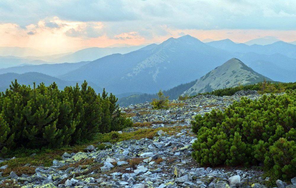 Масив Горгани, гора Довбушанка
