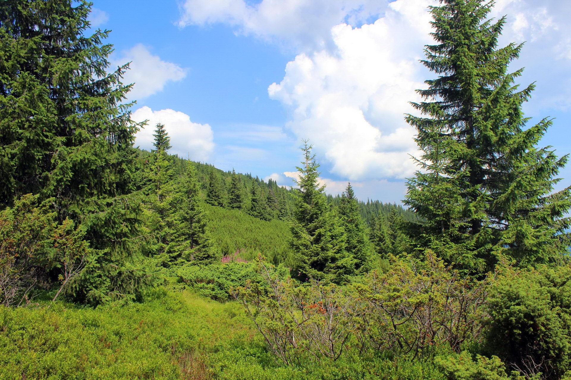 Туристический маршрут на гору Шпицы из Заросляка