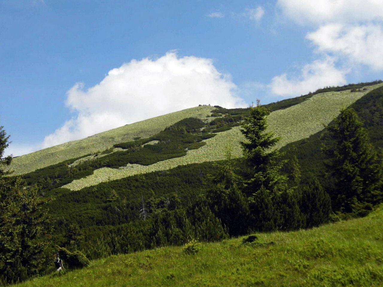 Туристичний маршрут на гору Стримба (1719 м)