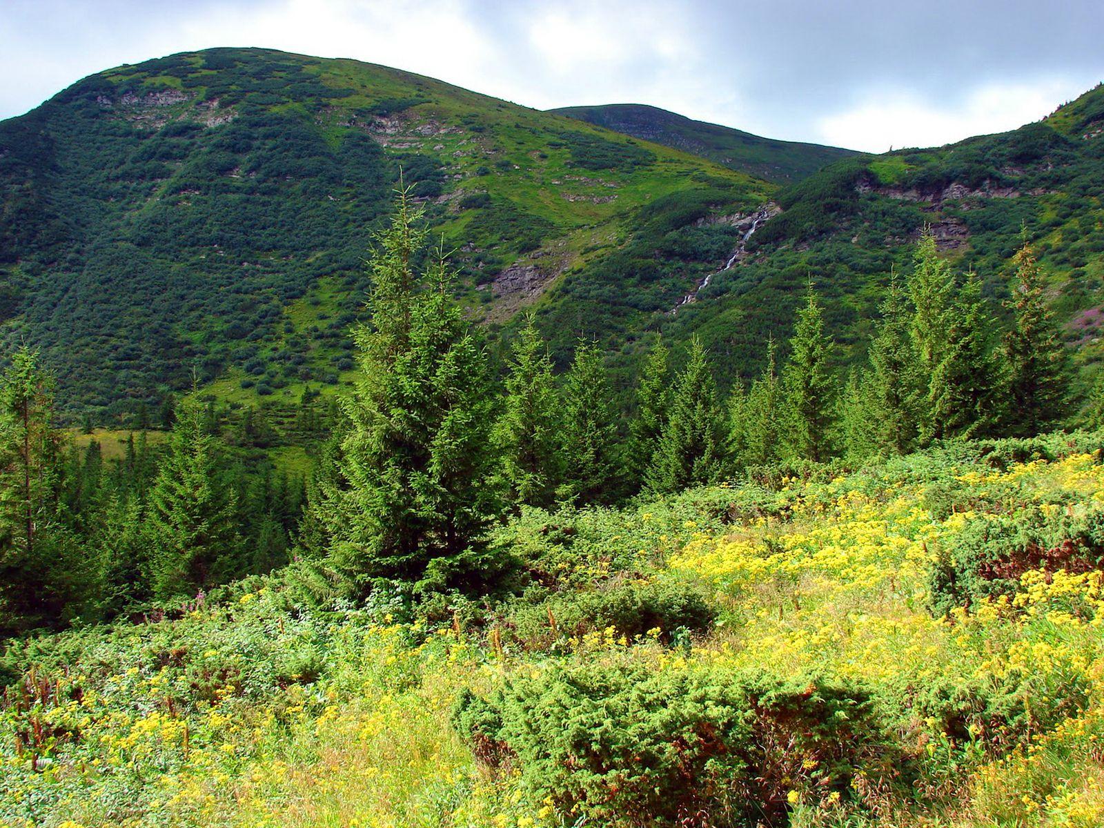 Маршрут на найвищу вершину України – гору Говурла