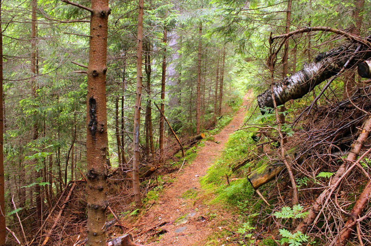 Карпати, маршрут на вершину Грофу і Пареньки