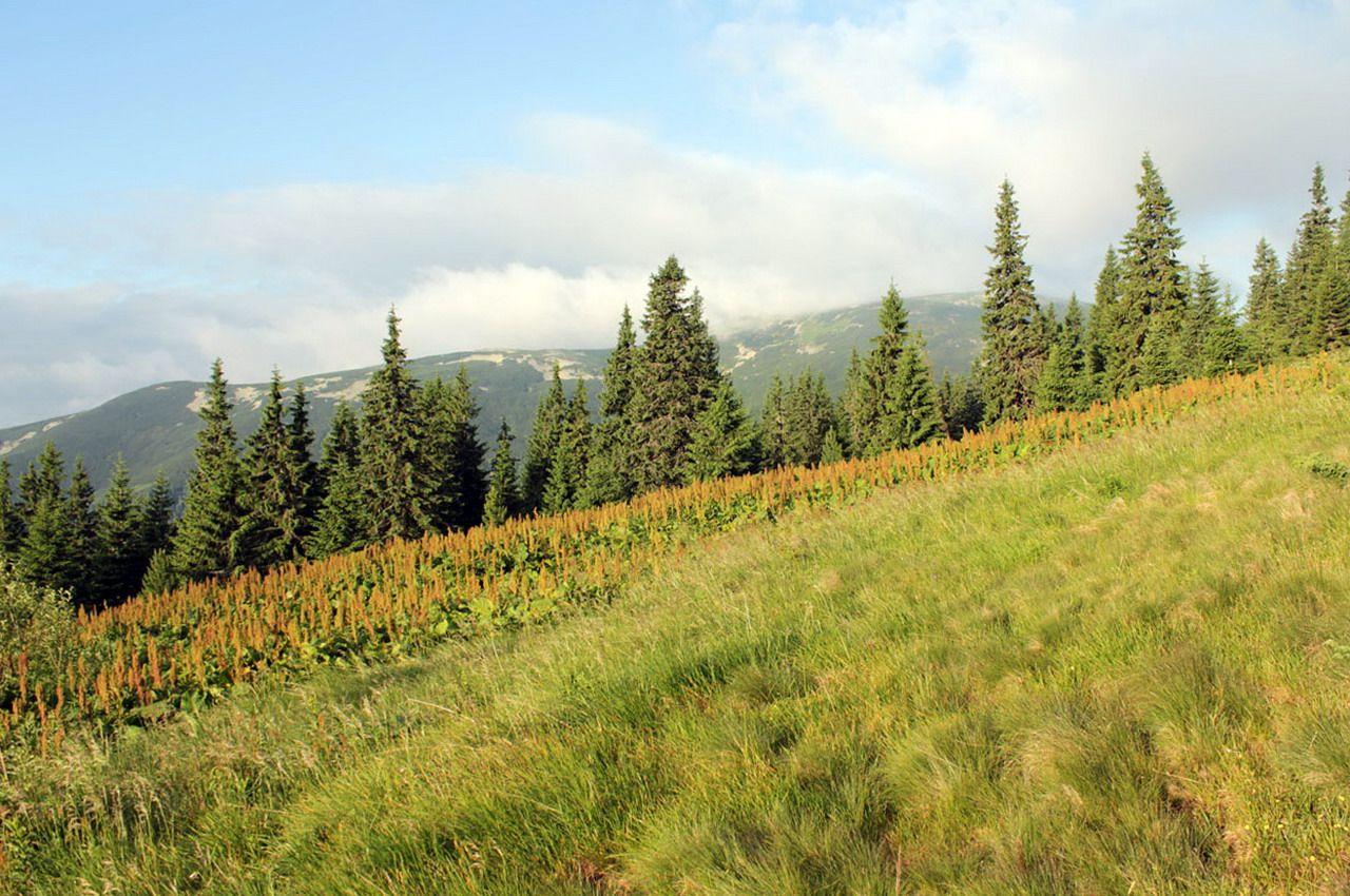 Горгани, маршрут на Грофу і Пареньки