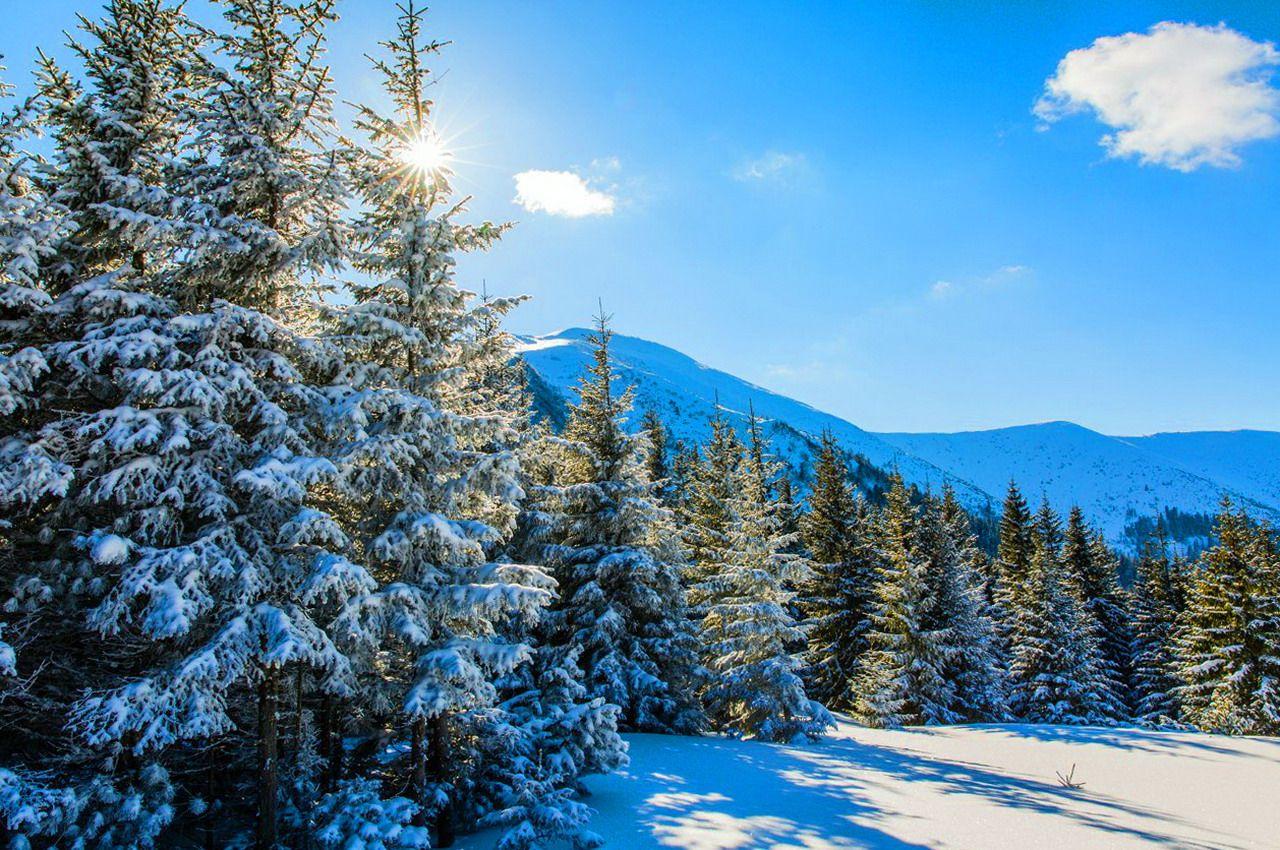 Горгани взимку