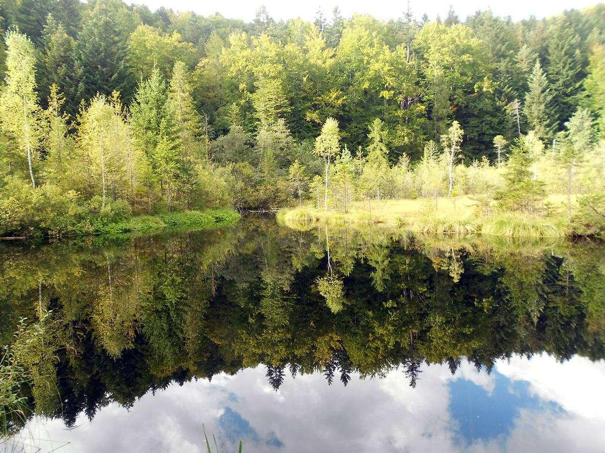 Львівська область, озеро Журавлине (Мертве озеро)