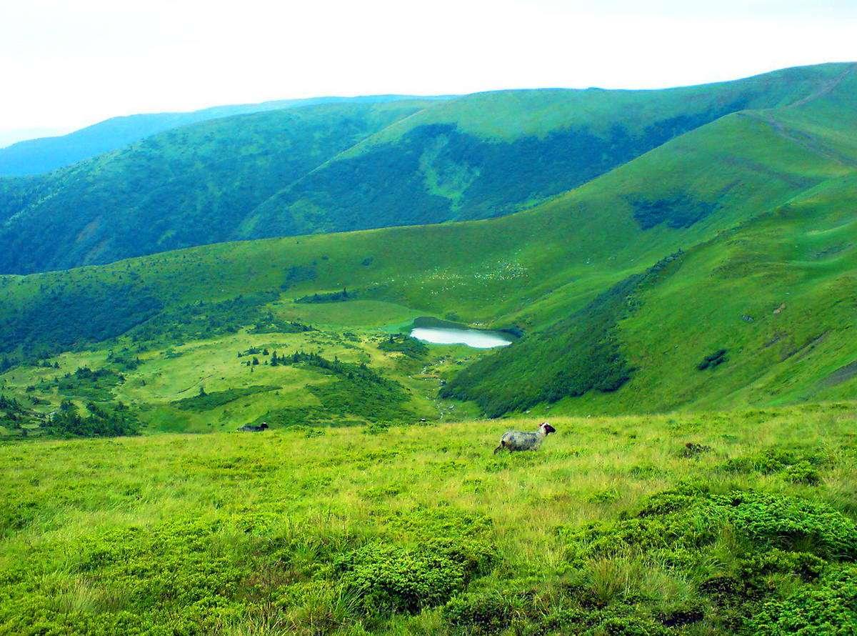 Закарпатська область, озеро Апшинець