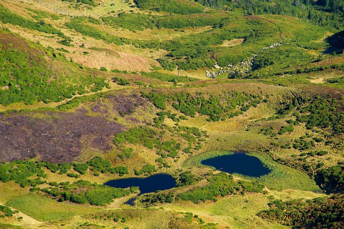 Гірський масив Свидовець, озеро Івор (Драгобратське)
