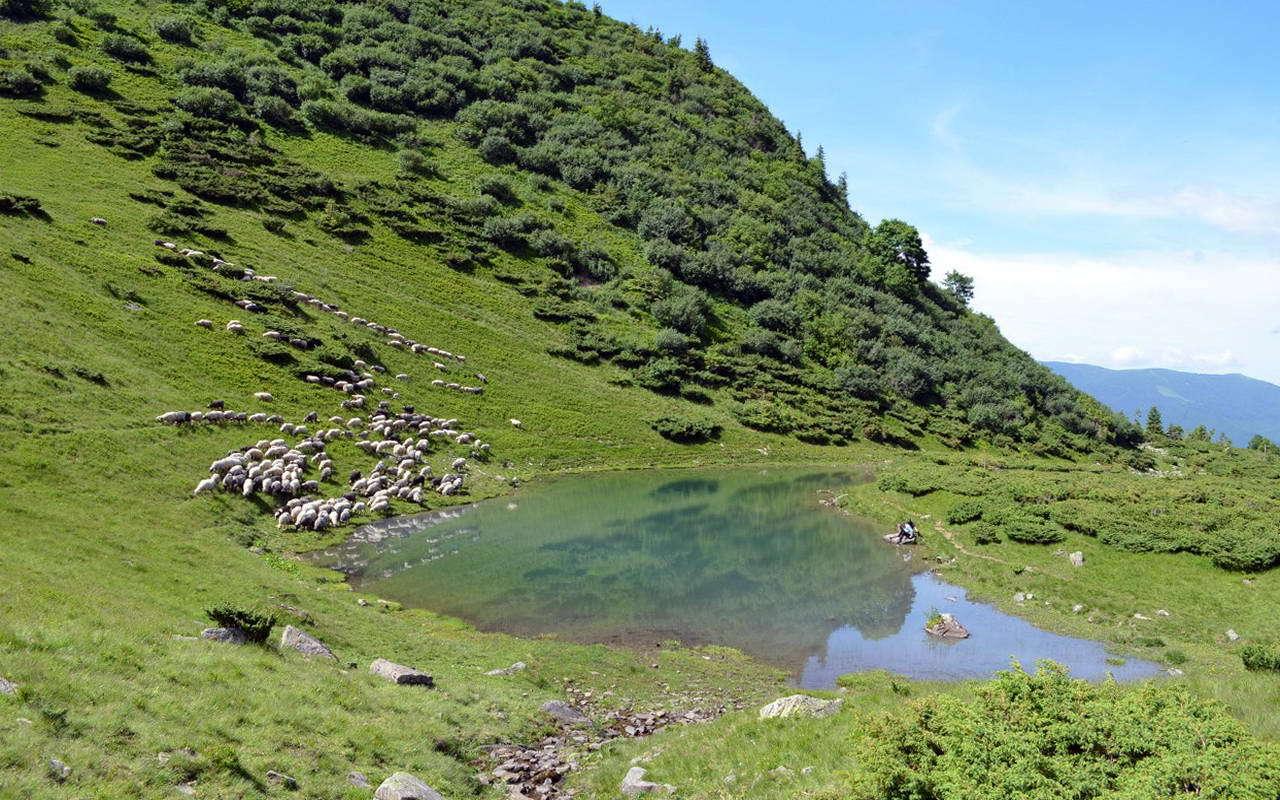 Озеро Ворожеська, Закарпатська область