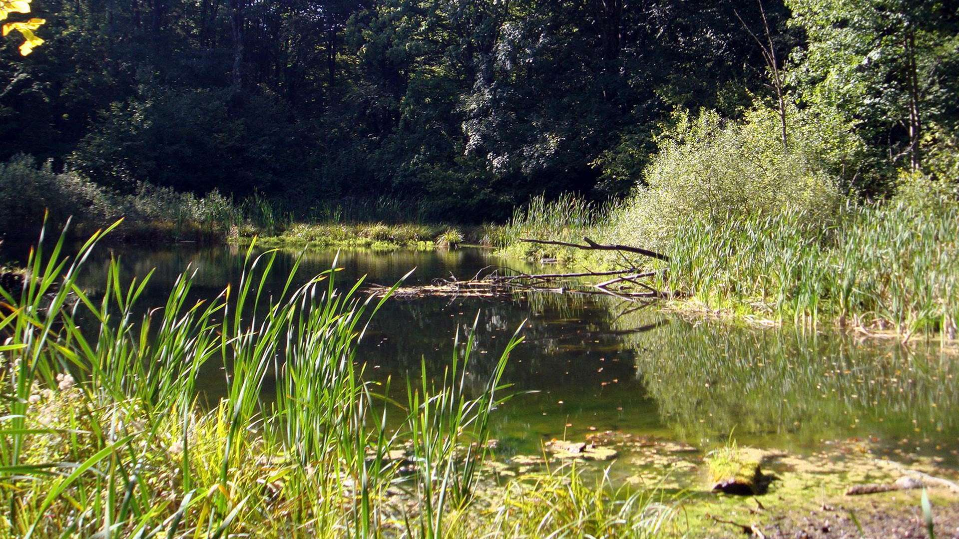 Озеро Лебедин в Шешорах