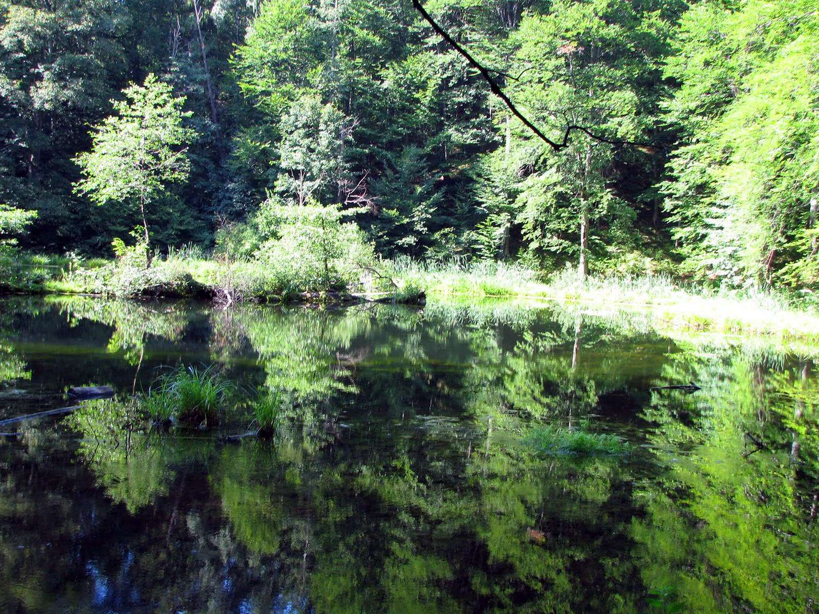 Озеро Лебедин на околицях села Шешори