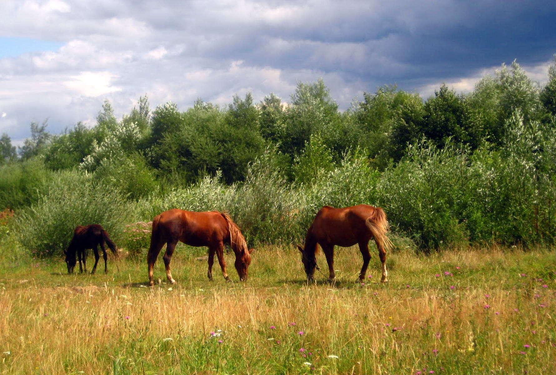 Карпати, смт Солотвин
