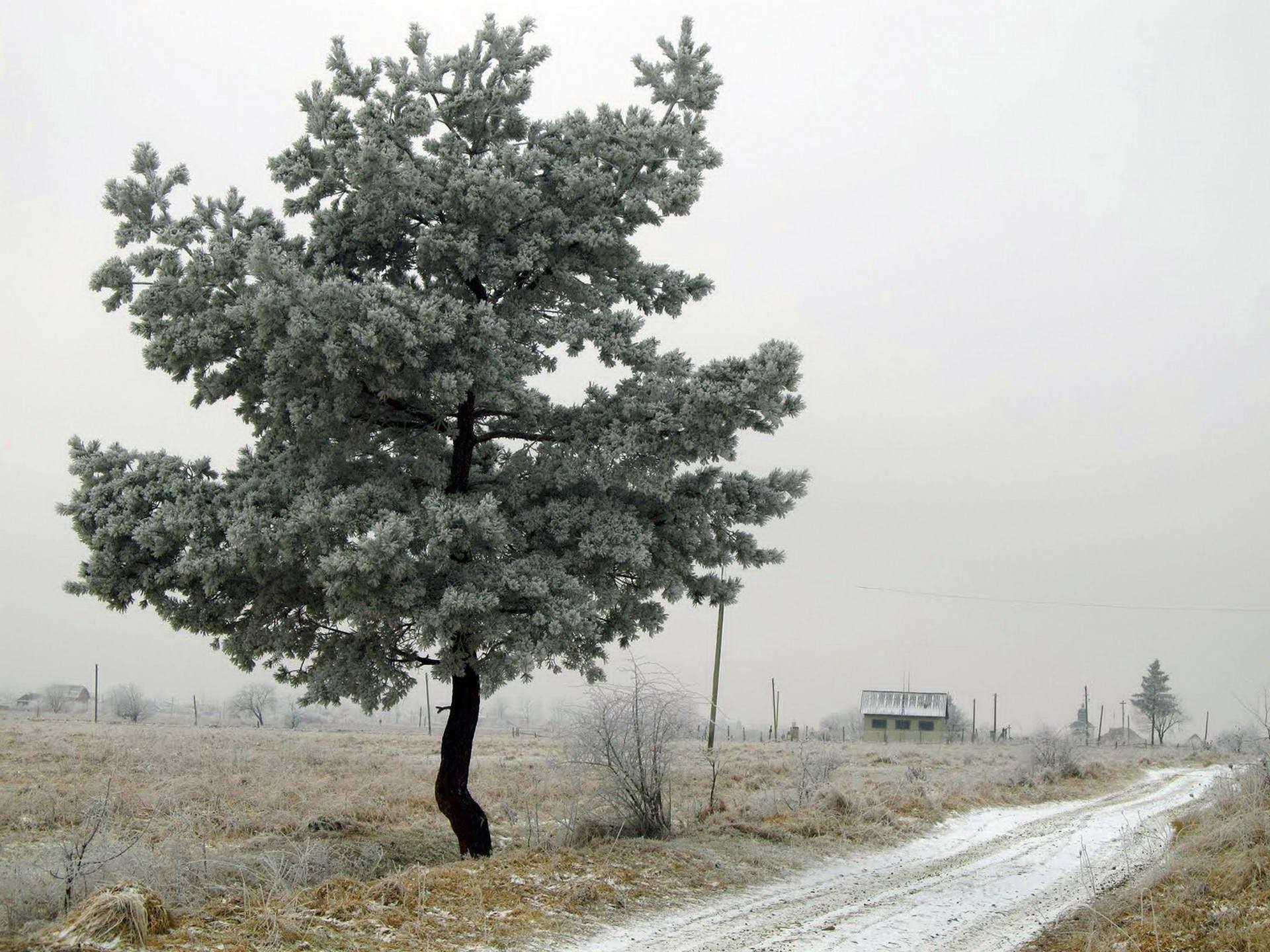 Гірське село Солотвин, Богородчанський район