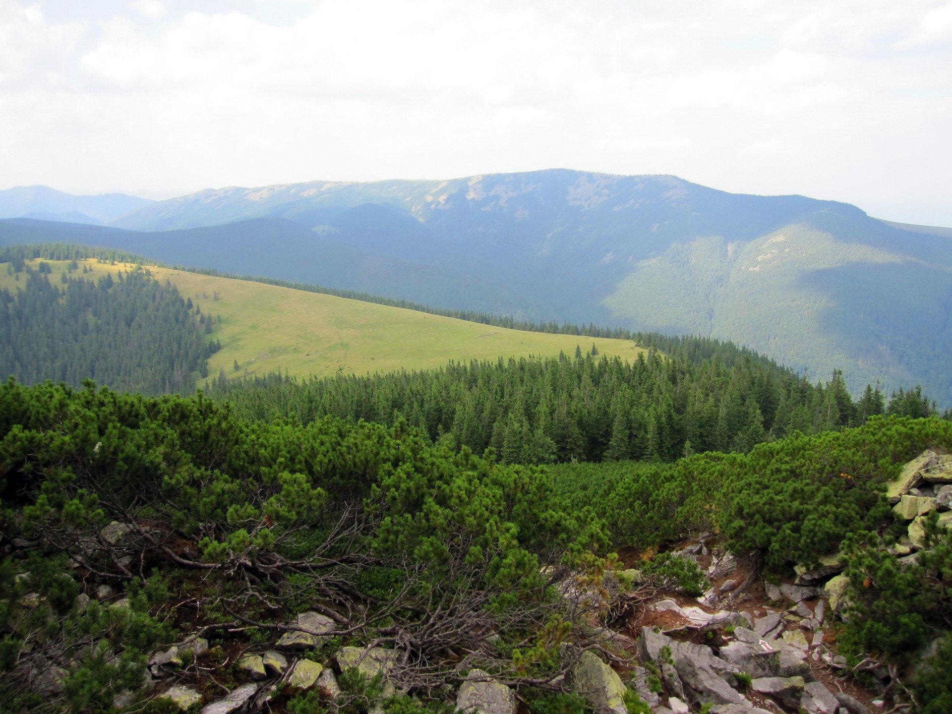 Карпати, панорама із схилів гори Хом'як