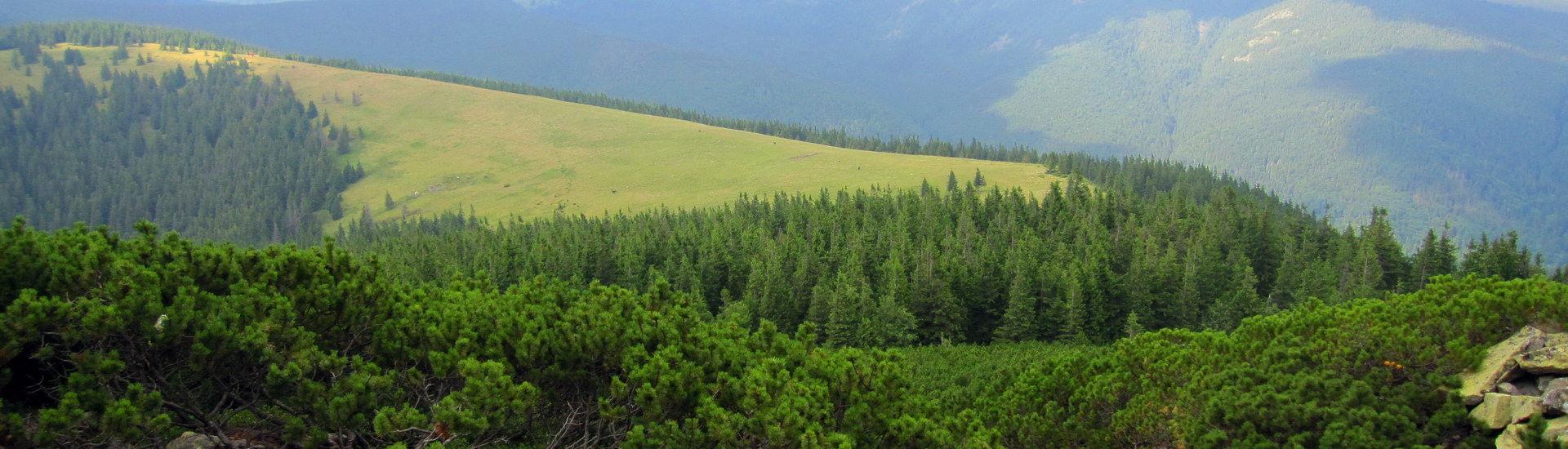 Карпати, вид із гори Хом'як