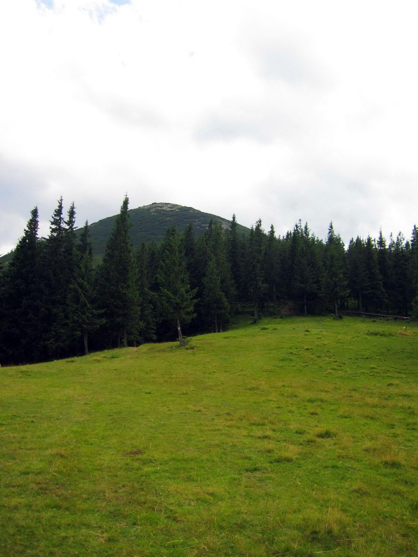 Гора Хом'як в Карпатах