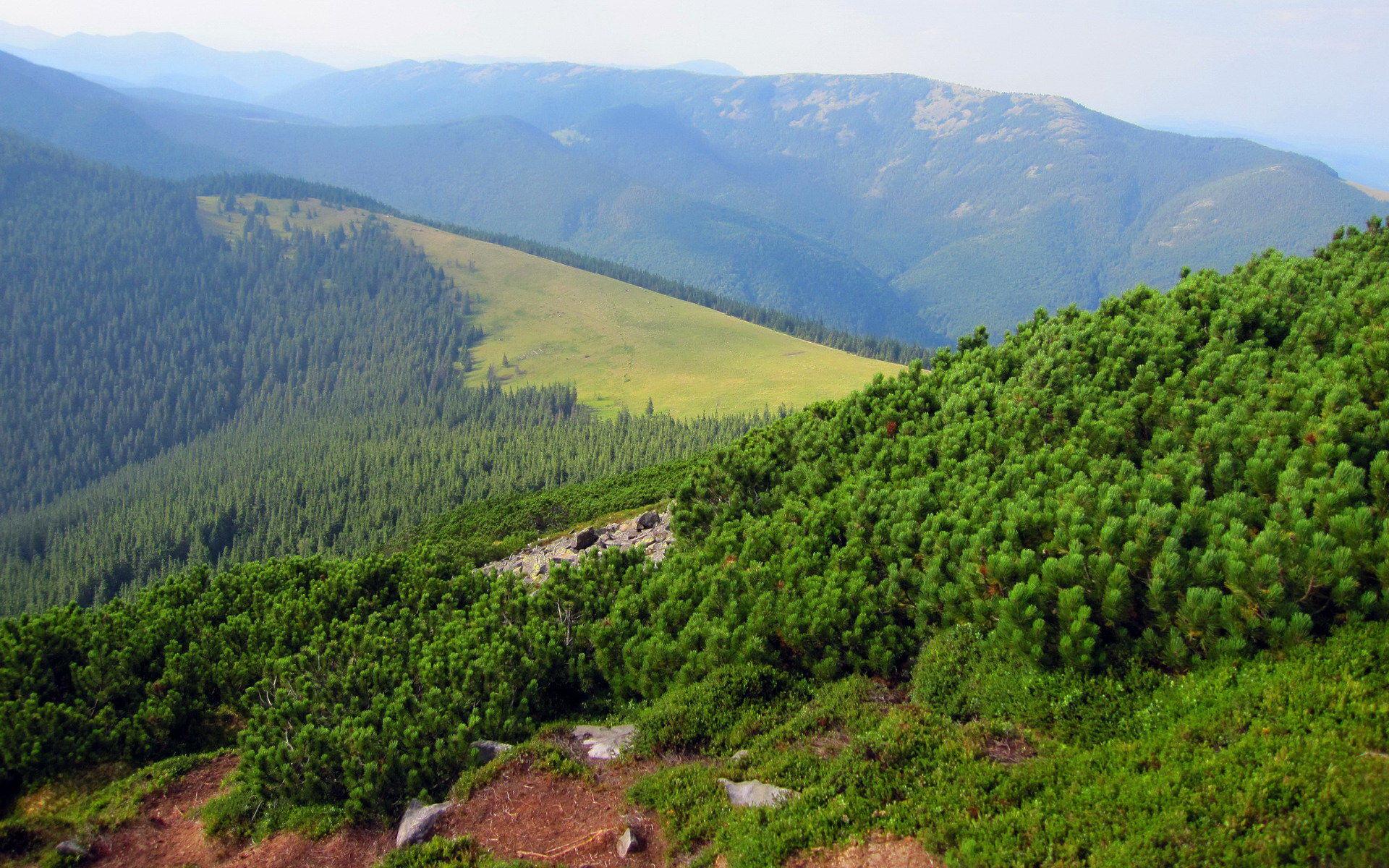 Вид на полонину із гори Хом'як