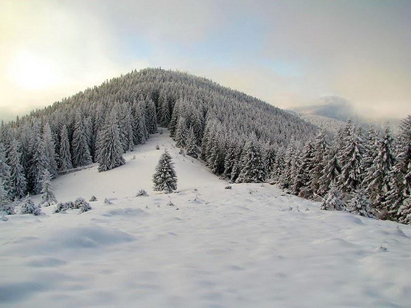 Село Волова на Прикарпатті